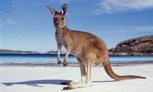 Kangaroo-Island-1